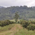 fruchtbar und Berge, Pailin
