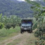 Bananenplantagen, Pailin
